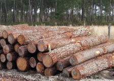 Estonian sawlog prices rise in April 2020
