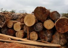 Ghana: Latest prices for wood products