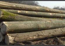 Romanian wood processing industry affected by supply shortage and rising prices for lumber