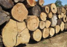 Brazilian Ipe logs in short supply