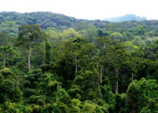 The Chinese got 2.5 billion m3 of stocking volume in planted forests