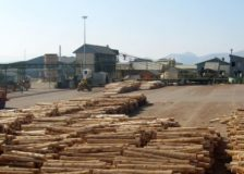 Singapore company invests $200 million in a wood processing complex in Russia's Far East