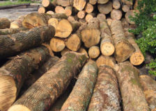 Sawlog prices fall in most regions of the world in Q2/2020