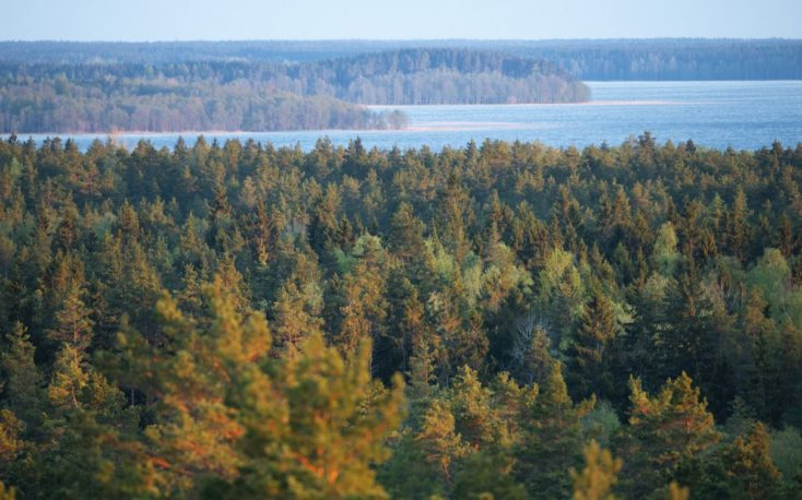 SCA signs letter of intent to buy 10 000 hectares of forest land in Latvia