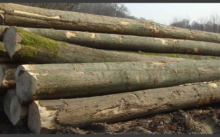 Romanian recent auctions reveal higher prices for standing timber