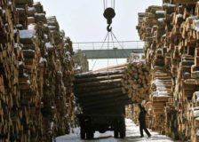 Chinese forestry industry wants to boost its output by 50% until 2025