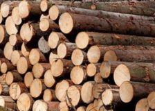 Falling spruce roundwood prices in Finland
