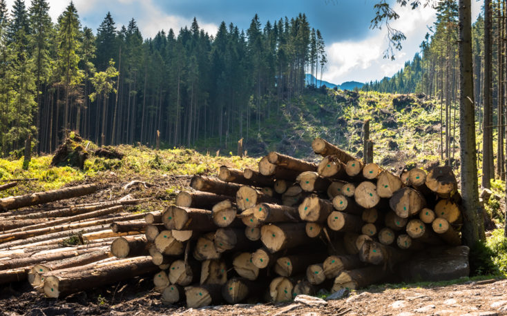 Bark beetle infestation is destroying forests in Central Europe