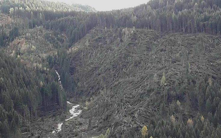Forests in Italy start to recover six months after Vaia storm