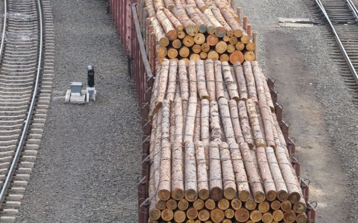 China: Boom in timber delivered via railway