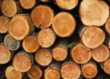 Dutch imports of FLEGT licensed timber are on the rise