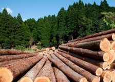 Russia and New Zealand compete over timber exports to China