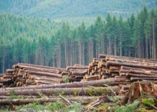 B.C. forest sector to diversify products amid high fibre costs, oversupply and low lumber prices