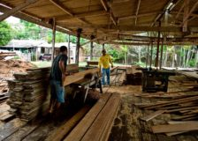 Indonesian timber industry seeks to take advantage of the US-China trade war
