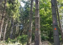 Czechia expects 30 million m3 of beetle wood from its forests in 2019