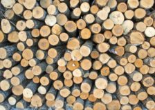 Weak market for European birch timber in China