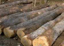 Romania considers banning wood exports outside the EU