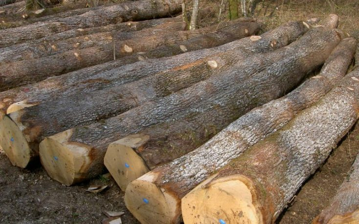 Romania to harvest 9.5 million m3 of roundwood in 2020
