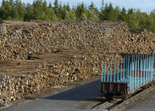 Finland: Forest industry under threat by the bark beetle effects, mild winters and coronavirus