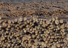 Global forest products markets likely to recover after sharp decline in mid-2020