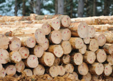 Prices for New Zealand logs crash due to slow demand in China