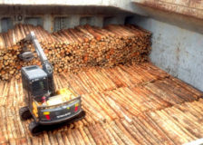 N. Zealand: Rising shipping costs impact prices of logs exported to China