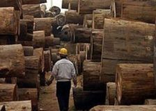 African tropical timber in rising demand but prices easing