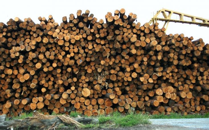 Austrian timber prices continue to rise