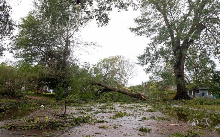 Hurricane Laura caused $1.6 billion in forestry, timber damages