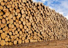 Germany: Softwood logs exports to China double H1/2020