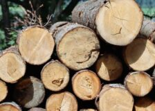 HS Timber, Egger and Kronospan accused of organizing a wood cartel in Romania
