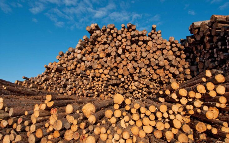 India's timber import market in crisis