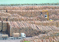 Indian log and sawn timber import market hit hard by latest Covid-19 wave