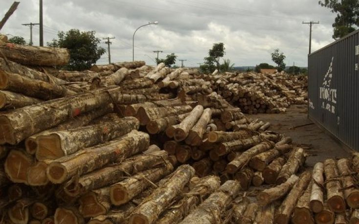 Teak purchases from Myanmar discouraged in EU countries
