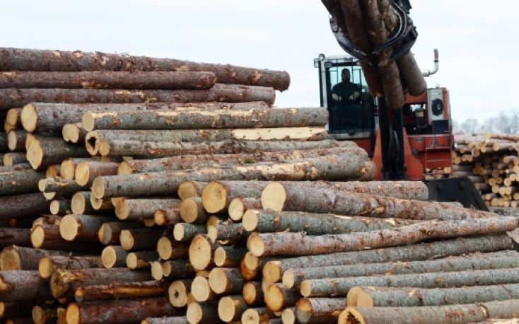 Massive French softwood logs exports to China