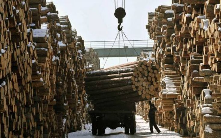 High stocks and weak demand cause falling timber prices in China