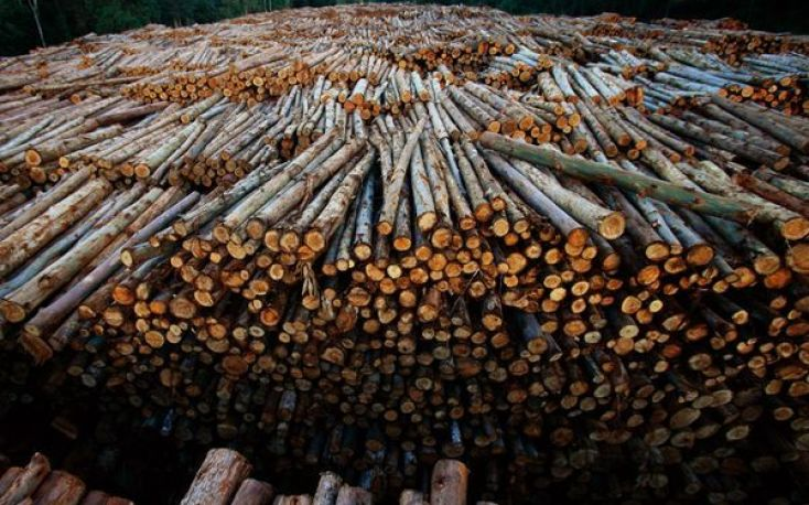 Brazil: Massive exports of eucalyptus logs to China