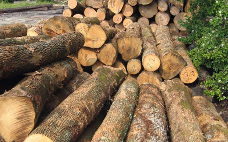 Increased lumber exports from Brazil boost domestic sawlog prices