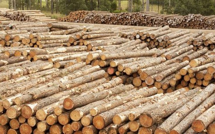 Sharp rise in prices for exported logs from New Zealand