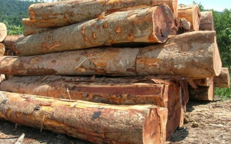 Malaysian timber companies facing the pandemic
