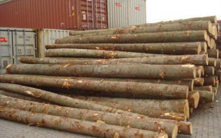 European spruce supply to China disrupted by container shortage