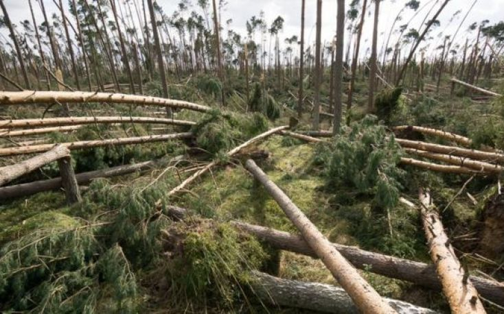 Italian forests ravaged by storms; almost 15 million m3 damages
