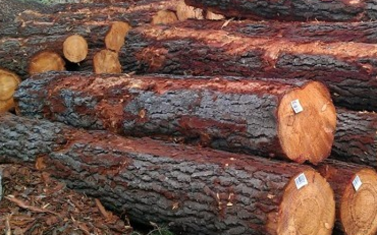New Zealand: Prices of logs exported to China at record levels
