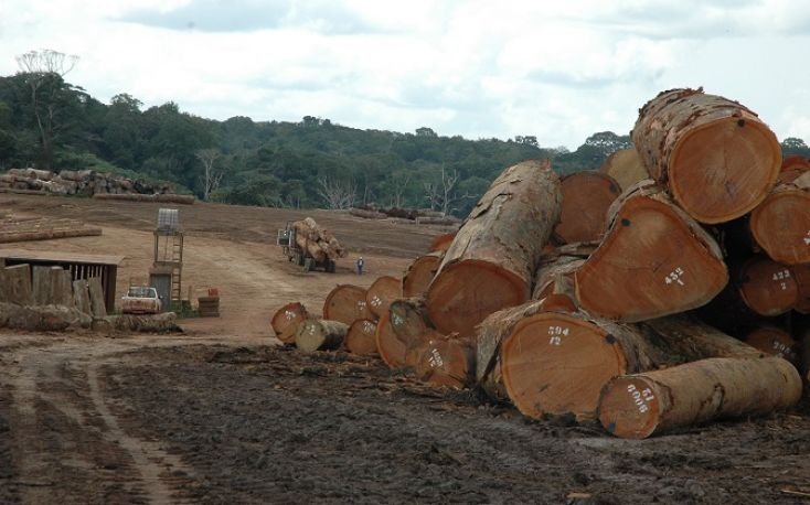 Sharp recovery in EU tropical wood product imports