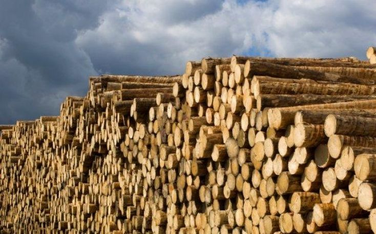 Massive European exports of softwood logs to China