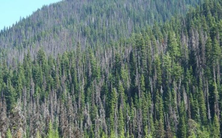 Bark beetle infestation starts to spread in Central European countries
