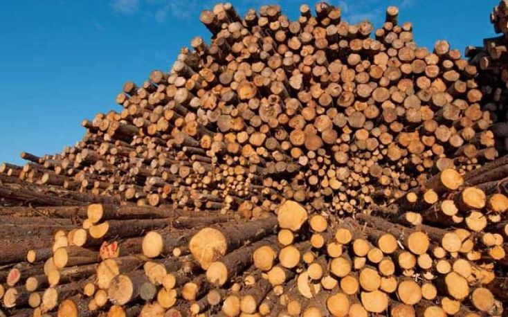 Global wood consumption hits lowest rate in the decade in 2019