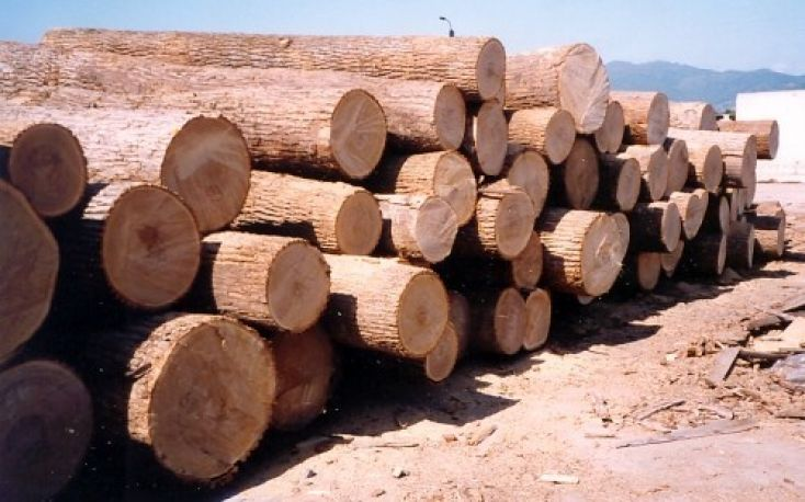 Russia plans to ban timber exports